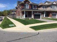 Beachview lawn service