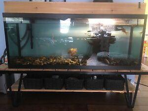 100 Gallon Aquarium /Turtle/Fish/Filter