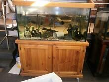 Fish tank/aquarium- closing down sale in Merrylands. Merrylands Parramatta Area Preview