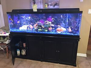 150 gallon aquarium  London Ontario image 1