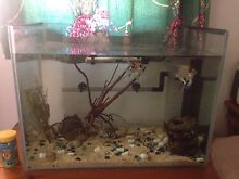 Fish tank Narwee Canterbury Area Preview