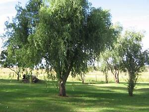 2 ACRES INVERELL AREA NSW Inverell Inverell Area Preview