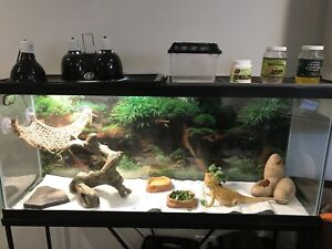 Bearded dragon with extras (tank/stand not included)