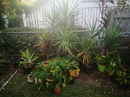 Beautiful Yucca Pot Plants (+ Other Plants)