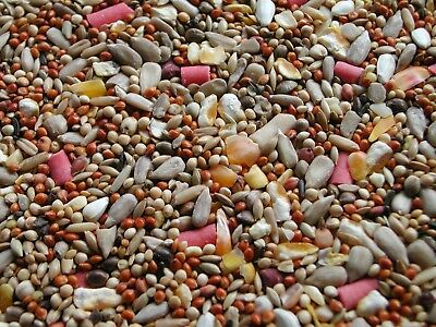 20kg No Mess Wild Bird Seed Mix Countrywide Garden Birds Sunflower Hearts