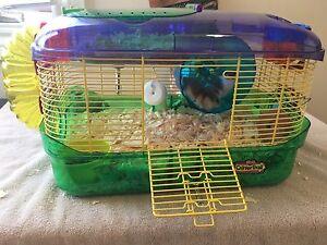 2 Female Dwarf Hamsters