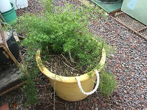 Plant and pot Melton South Melton Area Preview