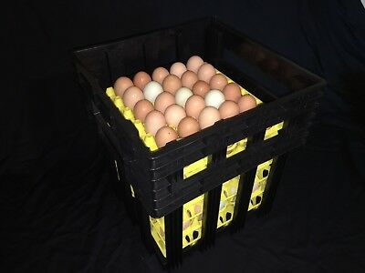 Egg Tray Carton Transport Crate With Egg Trays Chicken Egg Shipping Poultry Case