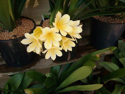 Plants clivia and orchids