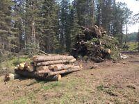 Sawmill Roughcut lumber