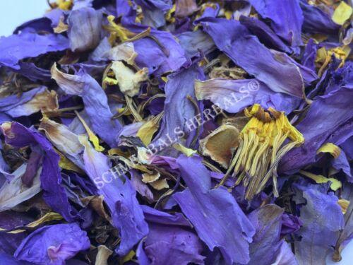"""Blue Lotus, N. caerulea, Organic Flower """"Deep Purple Thai™"""" ~ Schmerbals Herbals"""