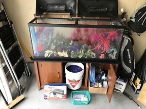 Fish tank summer steal of a deal
