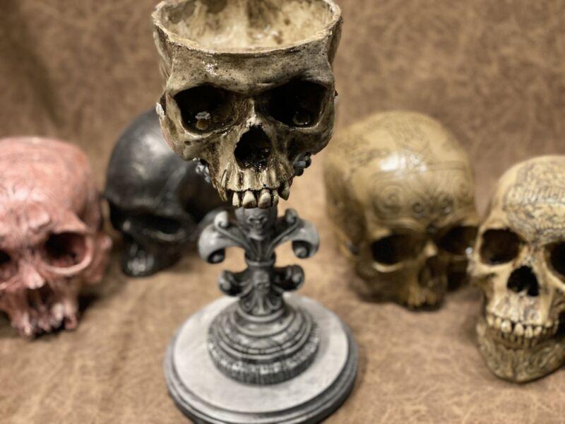 Real Human Skull Display Stand / Skeleton Vintage Medical Real Halloween