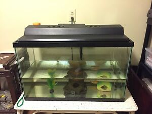 Fish and fish tank, pump and accessories