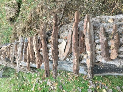 Cottonwood Carving Bark, Dense 200 year old tree for Crafts