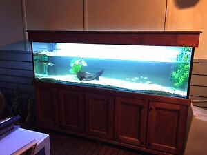 7ft aquarium tank with stand accessories and turtles Tecoma Yarra Ranges Preview