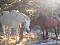 Horse hand / farm helper needed ASAP