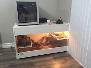 Bearded dragon and habitat for sale