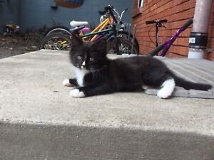 Kitten male very playfull great with kids eats anything