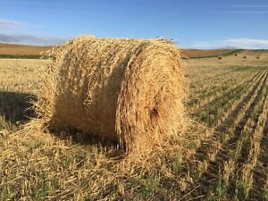 Triticale Greenfeed bales