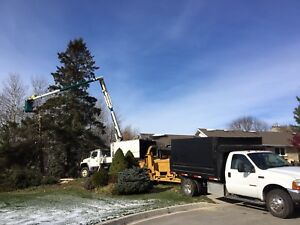 Tree Removal Affordable Prices