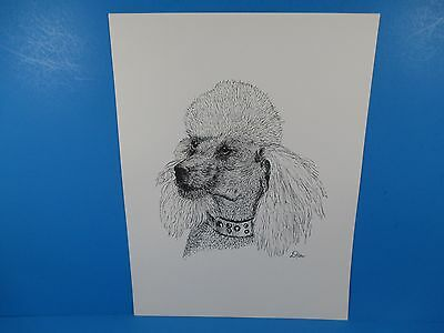 "Pen & Ink Lithograph By Donald Hofer Fauna Series 10"" x 13""  Poodle Dog"