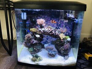 Fish and coral aquarium