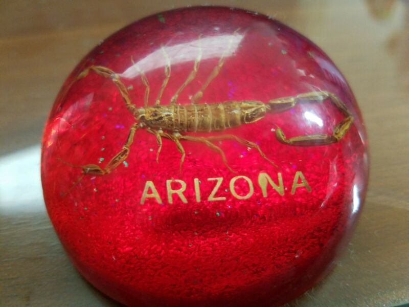 Real Scorpion in Lucite Dome Paperweight Arizona Souvenir Vintage