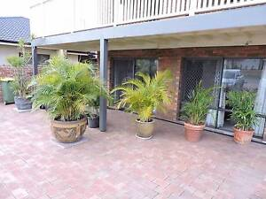 Apartment for rent,fully furnished Noranda Bayswater Area Preview