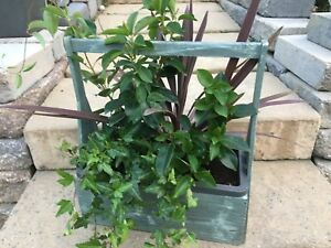 Wooden carry planter