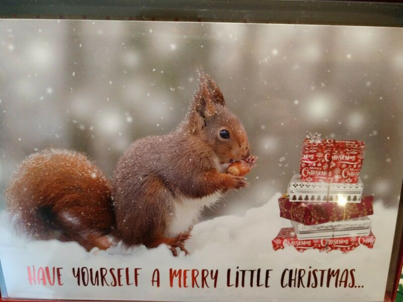 LEANIN TREE CHRISTMAS CARD SET SQUIRREL 10 PK BUY IT NOW IN EBAY STORE