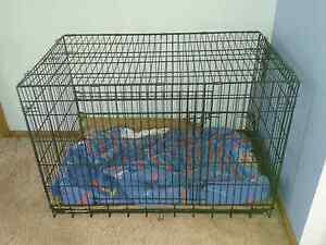 Large Dog Crate Devonport Devonport Area Preview