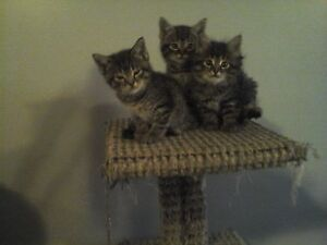 Free cute kittens to a good home