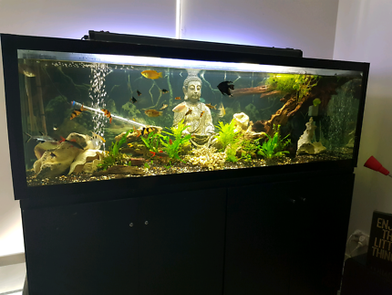 Fish tank including everything you need for it and 40 fishes