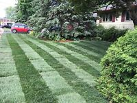 Workforce landscaping GRASS CUTTING SPECIAL
