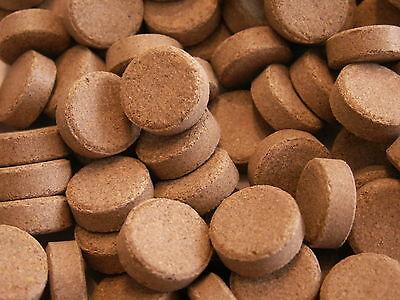 Kelp Hafttabletten 250ml Braunalgen 20% Futtertabletten Welstabletten Garnelen - Kelp 250 Tabletten