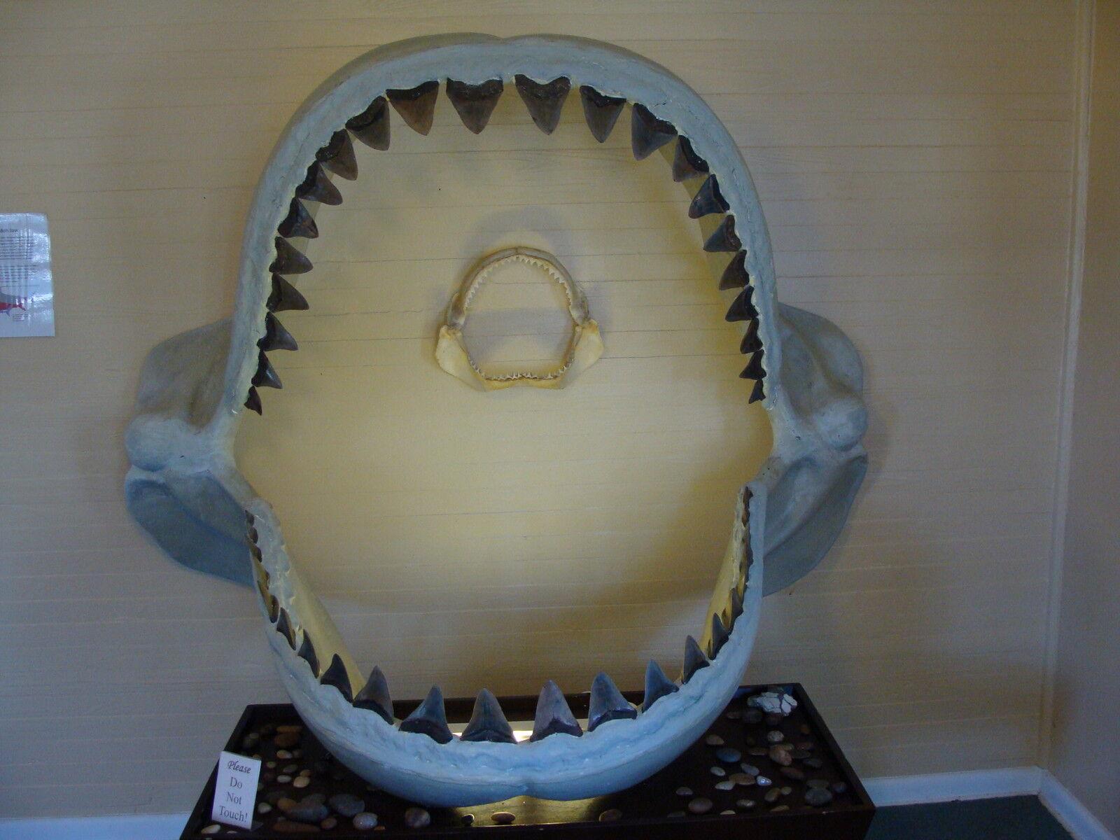 Ru-sharky s Shark Teeth