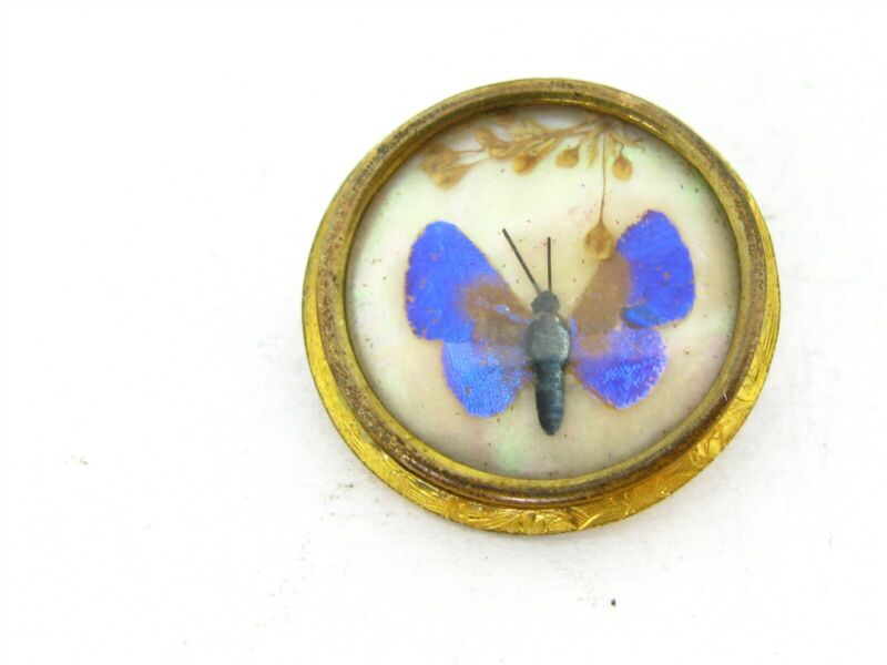 Antique Victorian Gold Filled Encased Butterfly Ladies Pin Brooch 3.9g B32