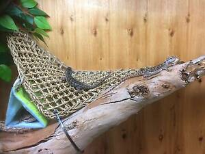 wanted reptiles Greenfields Mandurah Area Preview