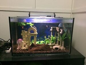 2ft Tank Plus Heater & Filter. Chermside Brisbane North East Preview