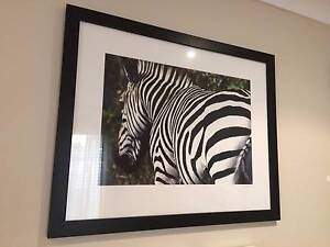Zebra Framed Photo print Edgewater Joondalup Area Preview