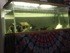 90 Gal tank for sale with large pletco!!