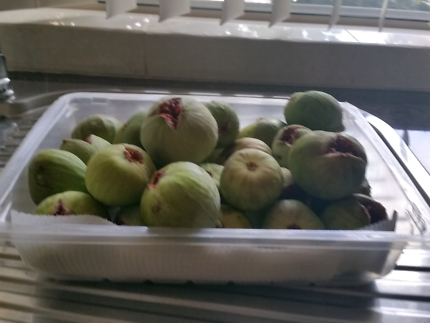 Fresh figs pick daily no chemical 10 dollars a kg
