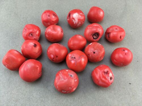 Large 25mm Natural Coral Beads Unworked Undyed Deep Salmon Pink