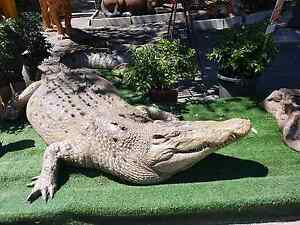 Crocodile Statue 11FOOT Wattle Grove Kalamunda Area Preview