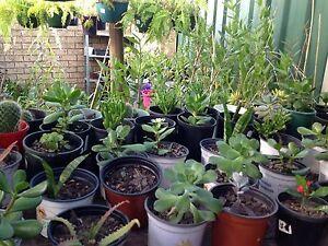 Succulents Colyton Penrith Area Preview