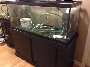 75 Gallon Tank, Stand AND SO MUCH MORE!!!