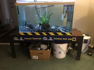 60 Gallons Red Belly Piranhas tank