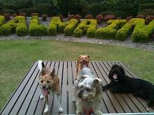 PROFESSIONAL DOG WALKER GREAT REFERENCES!!! PRICES START AT $10 Newtown Inner Sydney Preview