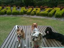 PROFESSIONAL DOG WALKER GREAT REFERENCES!!! PRICES START AT $10 Waterloo Inner Sydney Preview